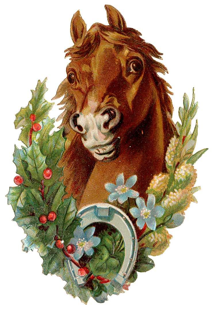 новые открытки с лошадьми